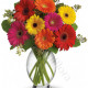 bouquet-di-gerbere-colorate-247x300