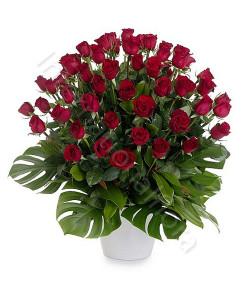 50-rose-rosse-247x300