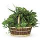 Composizione di Piante miste verdi in cesto