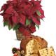 Stella di Natale rossa con Panettone