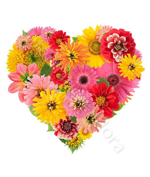 Cuore di gerbere e fiori colorati for Fiori gerbere
