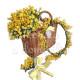 Cesto di Mimose con Coroncina e Mazzettino