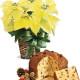 Stella di Natale gialla con Panettone