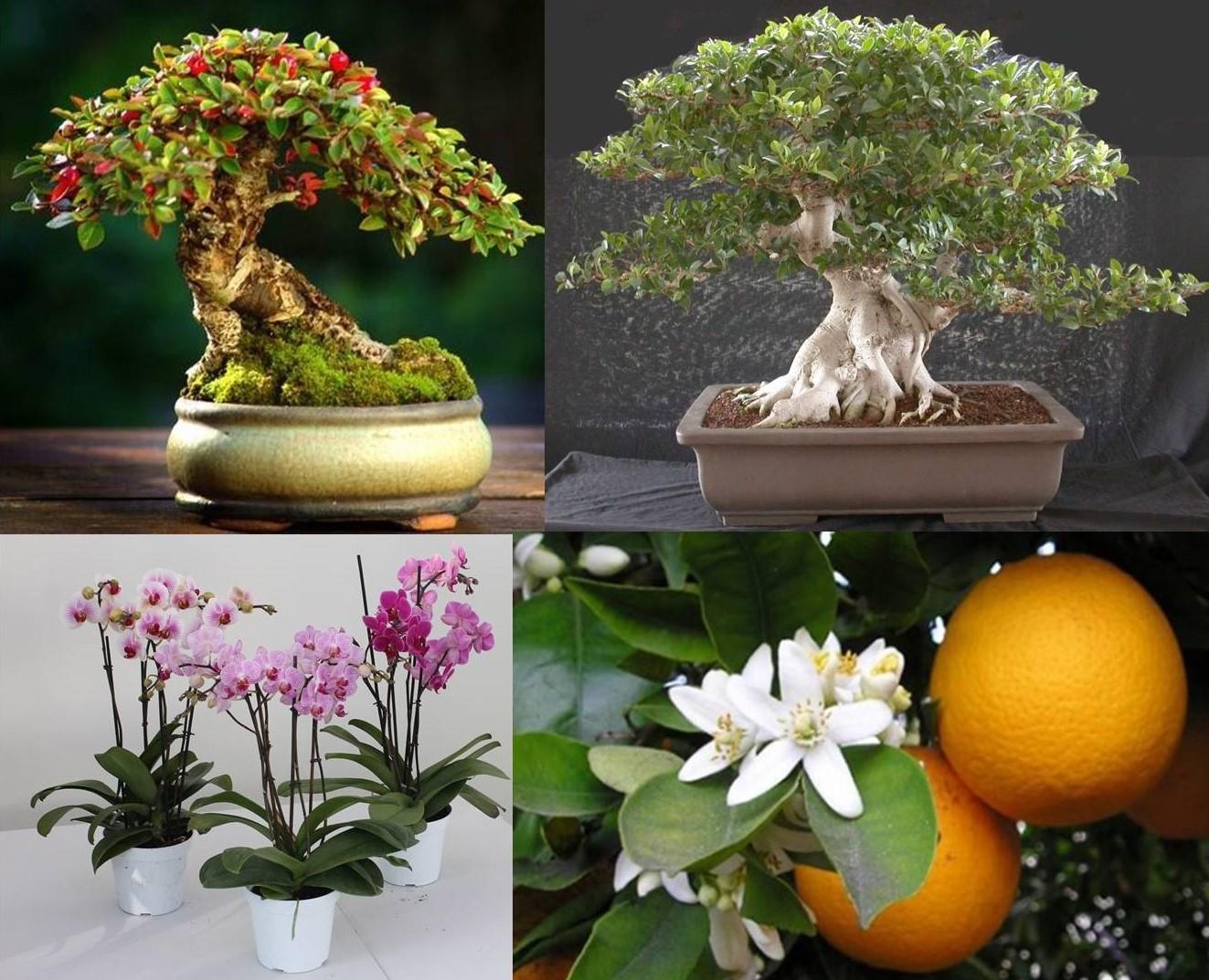 Piante Da Regalare A Pasqua come scegliere una pianta da regalare